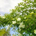 Il nostro giardino delle rose