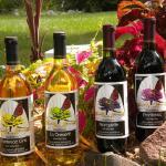 Flower Valley Vineyard