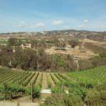 Oak Valley Winery