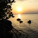 Foto de Coconut Bay Resort