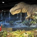 The dinosaur display