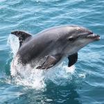 Explore - Swim with Dolphins