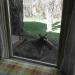 Moose - May 2, 2015