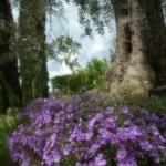 Garden of Il Fienile