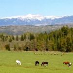 Horses and elk graze in our hay field