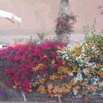superbe jardin