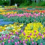 Blumen so weit das Auge reicht....