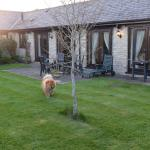 Fully enclosed garden, perfect for the dogs