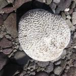 Photo de Soufriere Scottshead Marine Reserve