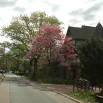 Kelly Drive near the Boathouse Row