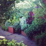 Ervas, flores, aromas