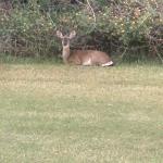 Foto de Jekyll Island Golf Club