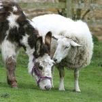 Dotty the famous donkey and Stanley