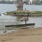 Wilcox Lake