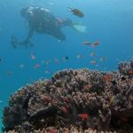 珊瑚と自分