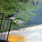 A friendly visitor coming up the boat ramp.