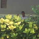 The flowers growing by Chaguaramas Golf Club restaurant