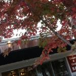 Grape & Grain Bar in Autumn