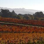 Sonoma Wine Country!