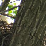 Eagle sitting on the nest