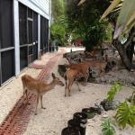 Photo de Deer Run Bed & Breakfast