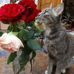 """Le chat """"Trésor"""" dans son Riad"""