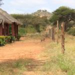 Photo de Red Elephant Safari Lodge