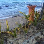 Foto de Dream Team Beach Resort
