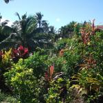 Beautiful Lush Gardens looking down towards beach at back of Bungalow 1