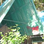 Foto de Corcovado Adventures Tent Camp