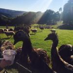 Solothurn Rural Resort