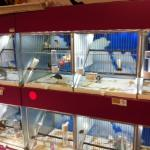 Bird Cages - looked good to me.
