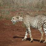 Ekea Safaris - Day Tours