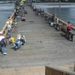 people love to fish on the Pier