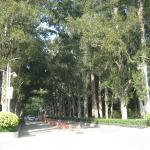 Tree Lined Grounds
