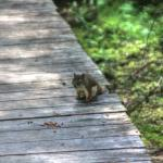 Spruce Bog Boardwalk Trail Foto