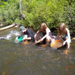 panning for gold in Spring Creek