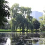 Rijswijkse Bos