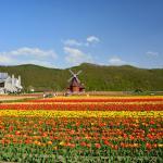 風車があってオランダにいるような雰囲気です