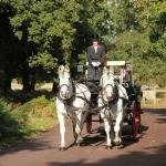 Operation Centaur - Carriage Rides