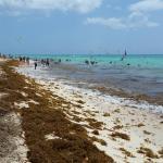 Beach. Lots of seaweed!