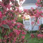 Spring at Anna V's
