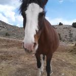 one of Jerry's horses