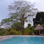 Foto de Belize Jungle Dome