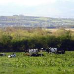 Pasture area !