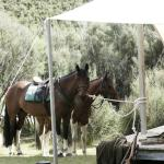 Explore the property on horseback with a streamside lunch at Safari Camp