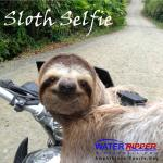 Sloth Selfie on the way to the beach