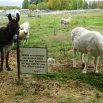 Donkeys to keep you company