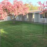 Cherry trees in the courtyard