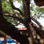 Tree-House Cafe Foto